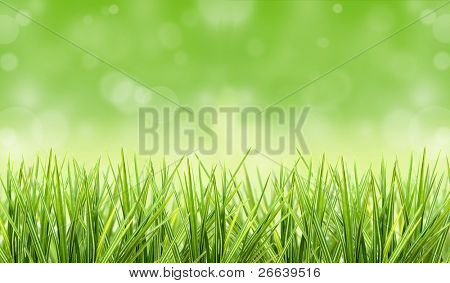 Grass with shiny blur background
