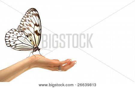 Idea leuconoe butterfly on woman hand, isolated on white background
