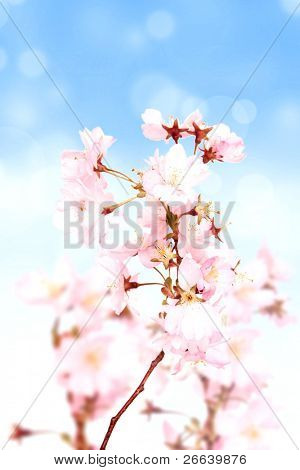 Spring pink blossoms with blur sky background