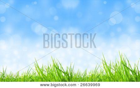 Fresh grass background with shiny blur sky