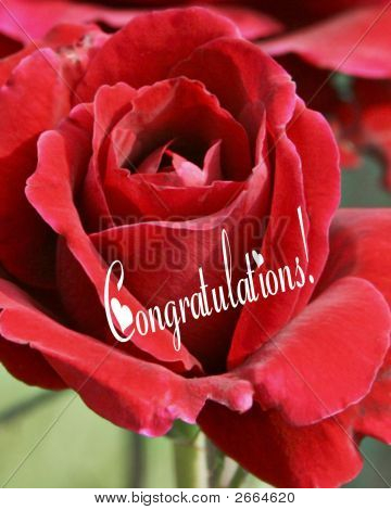 Congratulations Red Rose