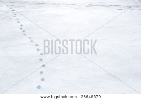 Animal tracks in snow with space for text