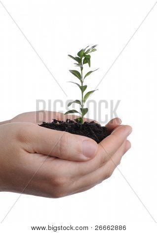 isolierte Frau Hände halten Boden und Pflanze