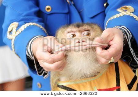 Monkey lips