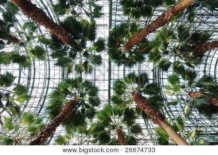 Glass atrium with Palm trees