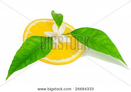Orange, Fower With Leaves And A Slice