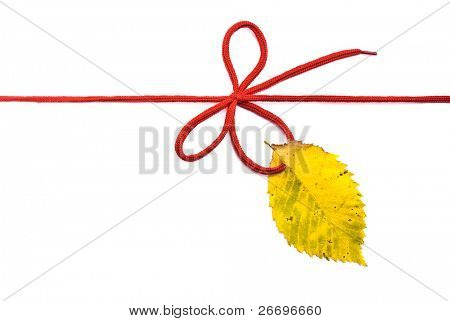 Red shoelace,bow with autumn elm leaf
