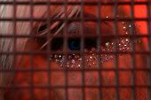Transgender Person Behind Net. Fashion Male Eye Makeup. Transgender Man Wear Makeup With Sequins. Ma poster