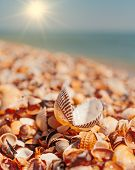 Open Seashell Lying On Sall Shells Cover In Front Of Horizon Line With Bright Sun poster
