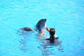 stock photo of grampus  - Dolphin show - JPG