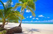 Постер, плакат: Пара palm дерево на пляже летом возле морской воды Белый песок тропической природы Голубое небо
