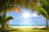 image of bay leaf  - Sun in blue sky and palm trees gateway to white sand beach - JPG