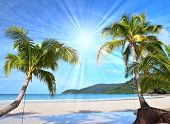 stock photo of palm  - Shining sun on nice beach with palm trees - JPG
