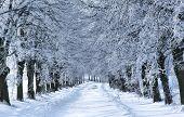 Allée arbre hiver