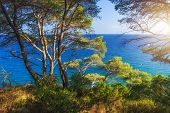 Mediterranean Nature. View On Blue Sea And Clear Sky Through Green Trees On Hill On Sunny Summer Day poster