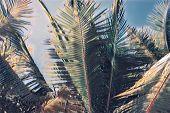 Blurry Palm Leaf On Blue Sky. Tropical Nature Faded Landscape. Coco Palm Leaf Digital Illustration.  poster