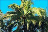 Green Palm Tree On Blue Sky Background. Tropical Nature Landscape. Coco Palm Leaf Digital Illustrati poster