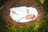 Happy Newborn Baby In Wicker Nest. Happy Baby Package. Newborn Girl Or Boy Happy Smiling. Every Bird poster