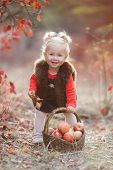 Child Picking Apples In Autumn.little Baby Girl Playing In Apple Tree Orchard.kids Pick Fruit In A B poster