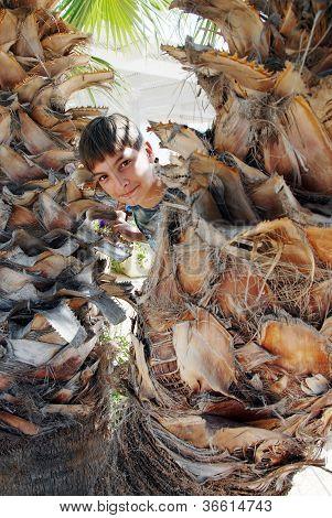 Boy Portrait Between Palms