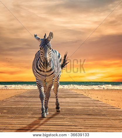 Zebra Walking On Wooden Plank At Beach