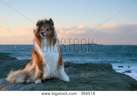 Dog In The Wind