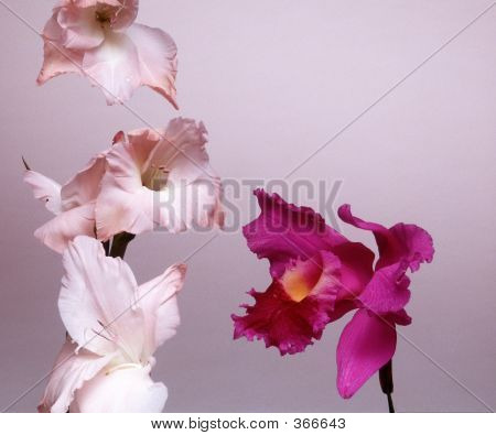 Flowers, Several Irises On Studio Background