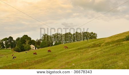 Peaceful country landscape