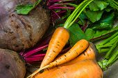 picture of exhumed  - raw carrots and beets from the garden - JPG