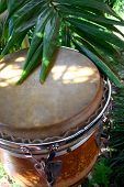 foto of congas  - Caribbean style conga drum by the palms  - JPG
