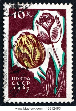 Postage Stamp Russia 1965 Tulips, Perennial Bulbous Plant