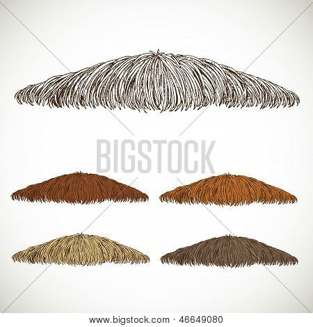 Mustache Groomed In Several Colors Set1. Easily Editable Detailed Graphic Design