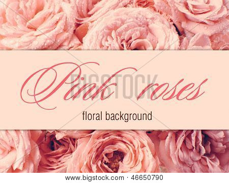 Flower Background With Pink Roses