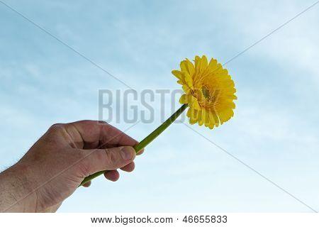 Yellow Gerbera Flower On Blue Sky Background