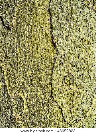 Texture Trunk Without Bark