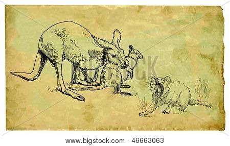 Kangaroos and Tasmanian devil