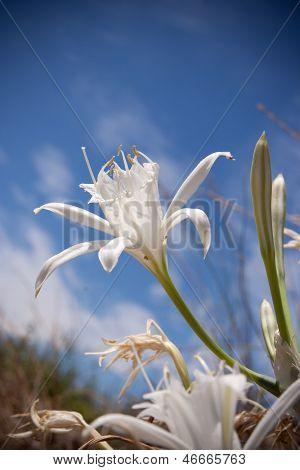 Close Up of o white flower