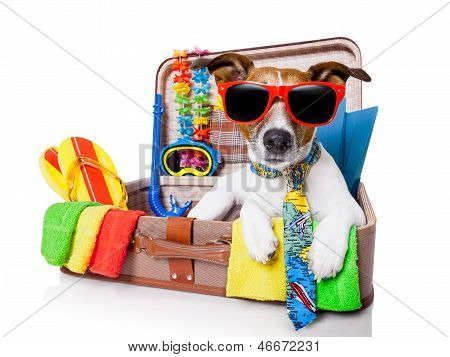 Summer Holiday Dog poster