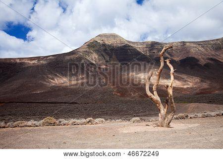 Southern Fuereteventura, Gran Valle