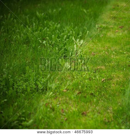 trimmed and untrimmed lawn