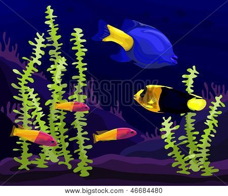 Sea, tropical fish