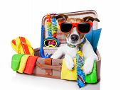 stock photo of packing  - summer vacation dog in bag full of holiday items - JPG