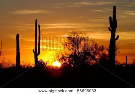 Desert Sunset Colection