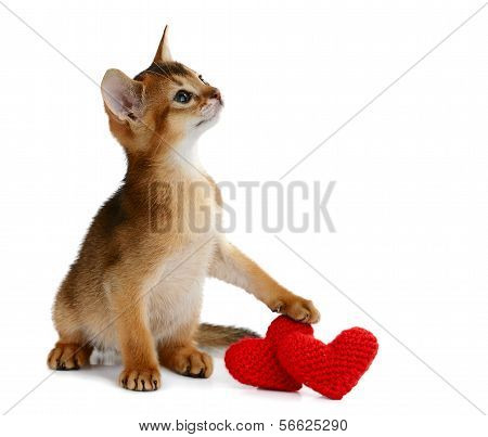 Valentine Theme Kitten With Red Heart Isolated