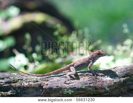 Green Lizard sitting on a piece of wood