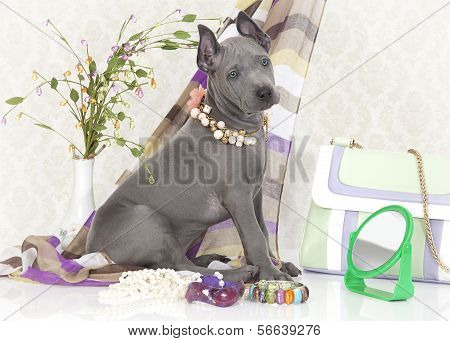 Ridgeback Puppy With Female Accessories
