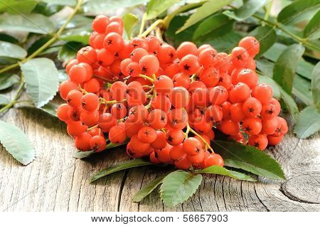 Rowanberry On Table
