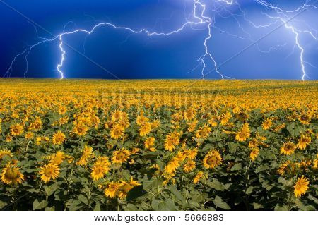 Thunderstorm On The Sunflower Horizon