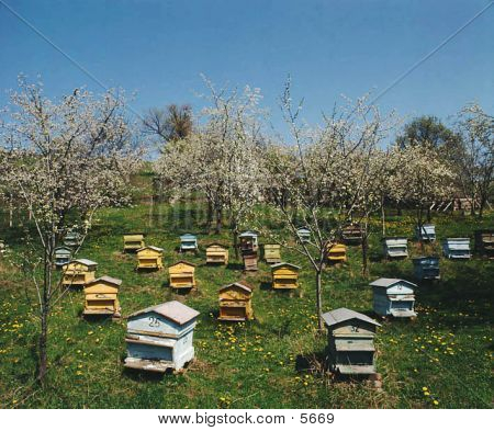 Bee-garden, Beehives