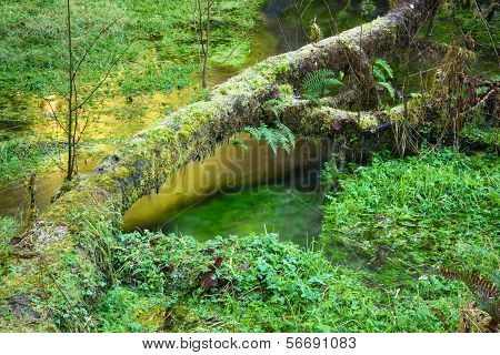 Hoh Rainforest Marsh Growth Ground Waterflow Green Water Reflection